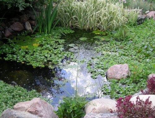 Pond with Plants