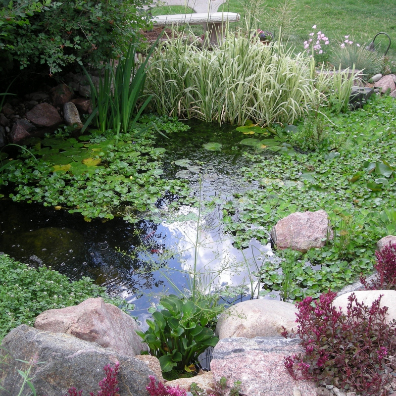 Water garden purely ponds for Using pond water for plants