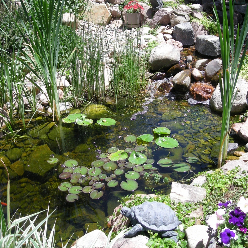 Water Garden Purely Ponds