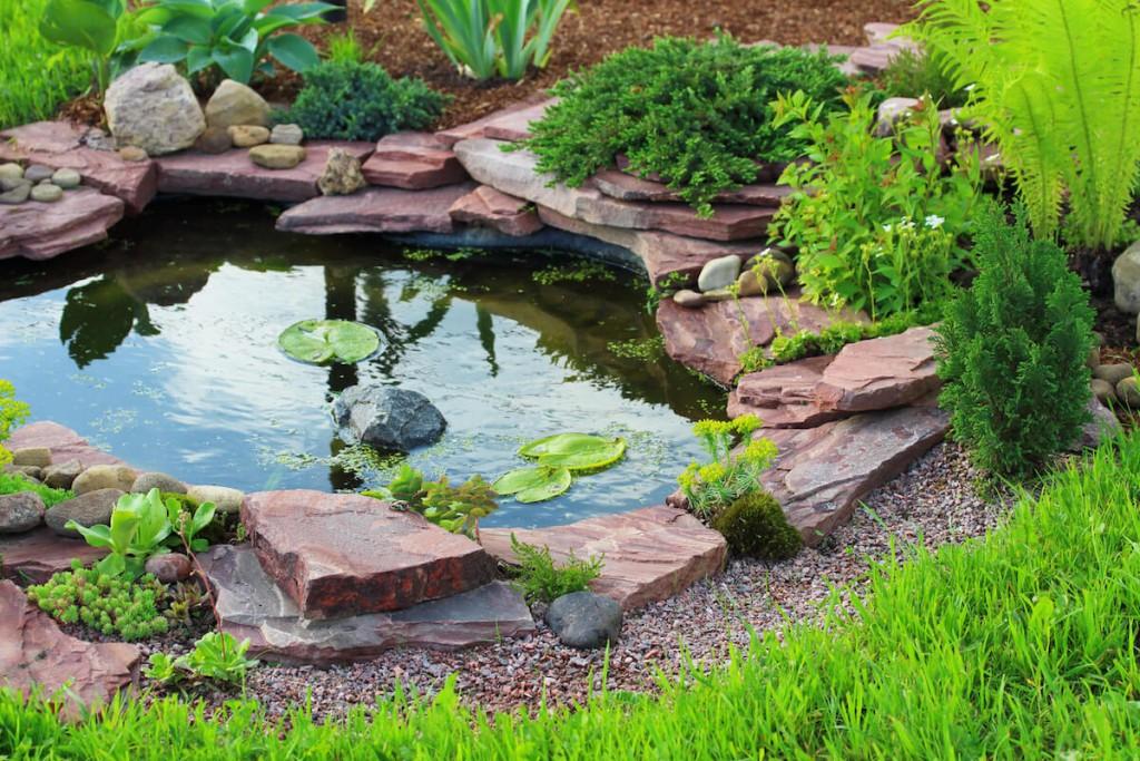 Backyard Pond In Colorado Springs Colorado Purely Ponds Fine Landscapes